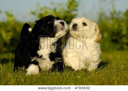 Black And White Puppy Dogs