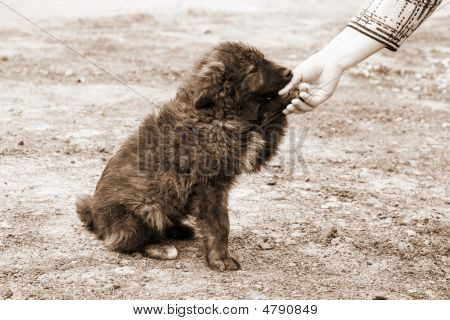 Lonely Homeless Dog And Helping Human Hand