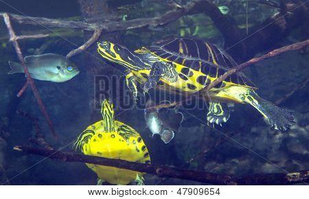 Underwater Traffic Jam