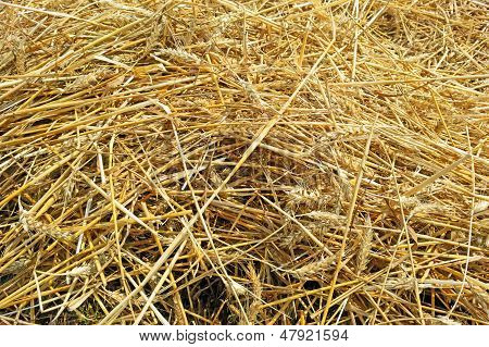 Background With Dig Mown Wheat