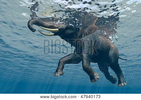 Un elefante nada a través del agua.