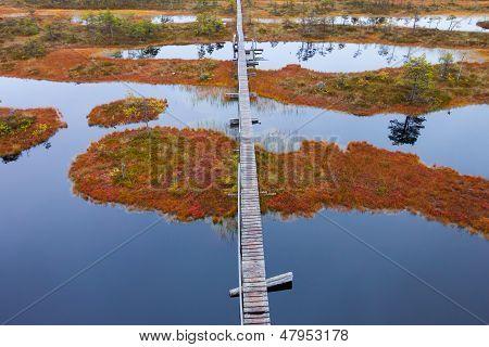Peat Bog Swamp Europe