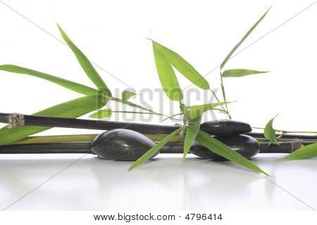 Bamboo Arrangement