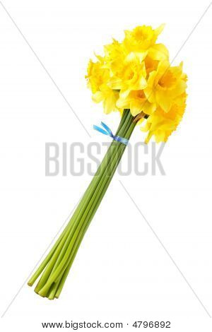 Bouquet Of Yellow Daffodils