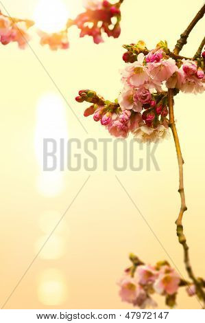 Abstract Beautiful Spring Background With Pink Blossom