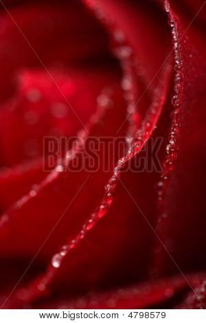 Macro Of Red Rose Petals