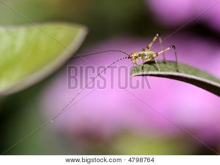 Nano-grasshopper
