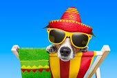 image of sombrero  - mexican dog on vacation relaxing on a deck chair - JPG