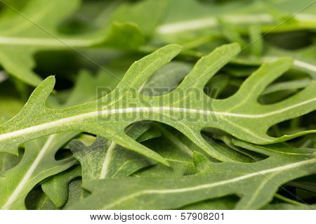 Close-up On The Heap Of Rucola