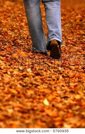 Walking Through Park