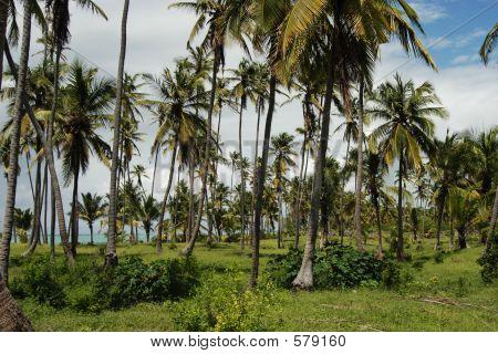 Playa de Zanzíbar