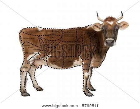 Portrait Of Brown Jersey Cow, 10 Years Old, Standing in front of white background, Studio Shot