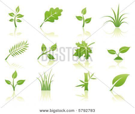 Floral Icon-set