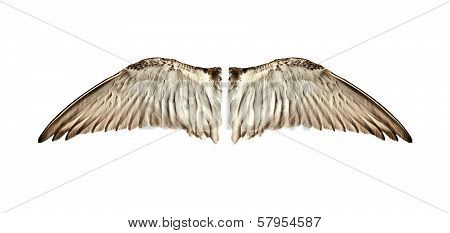 Pair of natural bird wings from inside view