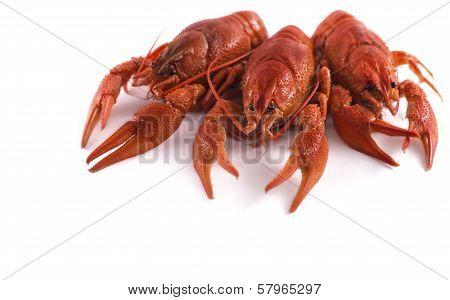 Three craw fish