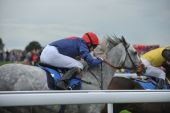picture of dapple-grey  - Jockey riding on dapple grey race horse during a race - JPG