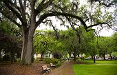 picture of southern  - Savannah Georgia - JPG