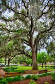 image of tillandsia  - Park benches line the historic squares of Savannah - JPG