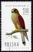Polish Stamp Depicting A Falco Naumanni