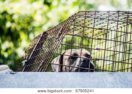 dog in an animal shelter, waiting for a home