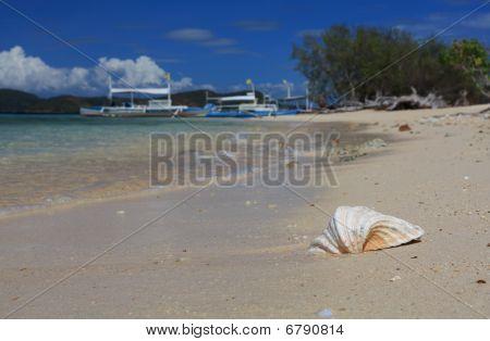 Shell At Beach