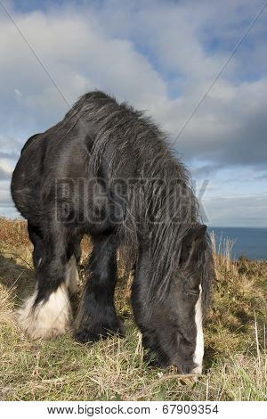 Black Horse At The Mountain
