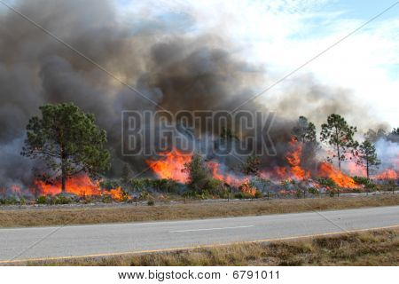 Florida Forest Ablaze