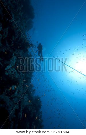 Diver, Fish And Coral