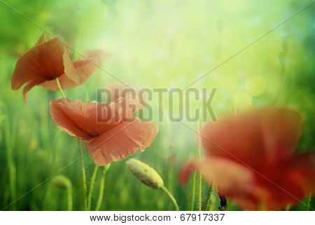 Poppy flowers in the sky