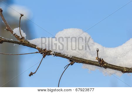 A Branch With Snow