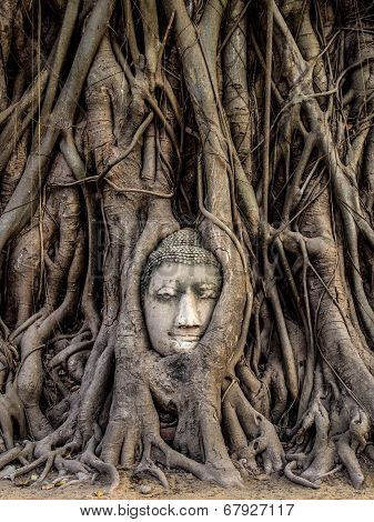 Head Of Buddha Statue In The Tree Roots, Ayutthaya, Thailand