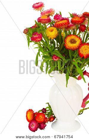 Everlasting flowers in vase