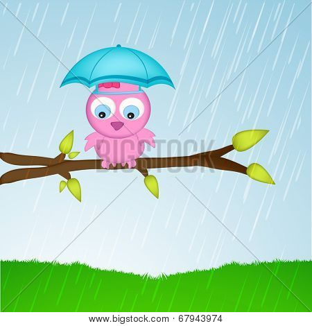 Kiddish monsoon season concept, cute little bird with umbrella, sitting on a tree branch.