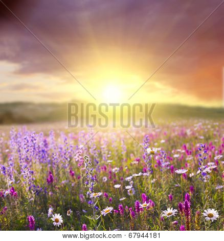 sunset in the flower field