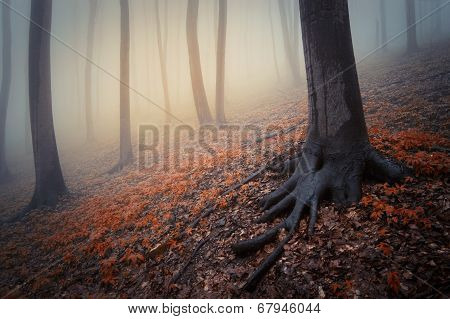 Trees with spooky roots in a dark forest with red leaves on Halloween