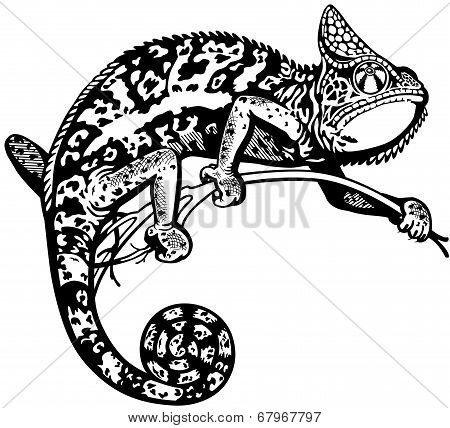 chameleon black and white