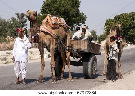 Typical Transport With A Couple Of Camels And A Wagon.
