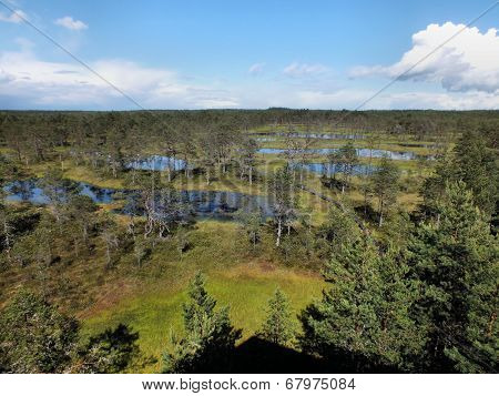 Viru Bog From The Viewing Tower