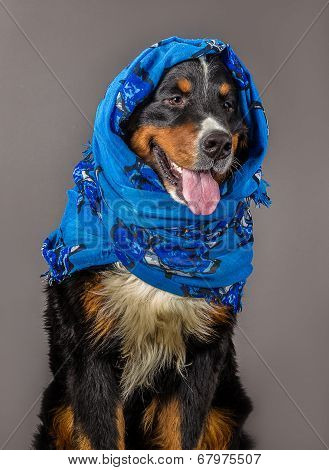Dog In Blue Scarf