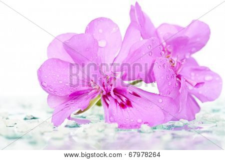 Beautiful background with pink pelargonium and water drops