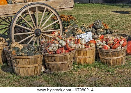 The Colors Of Pumpkin Farm