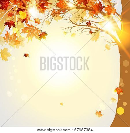 Autumnal trees with maple autumn leaves and sunlight. Place for text