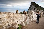 pic of gibraltar  - Tourist taking photo of monkeys on the Rock of Gibraltar - JPG