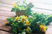foto of celandine  - Celandine herbs in mortar with pestle on wooden background medicinal herb - JPG