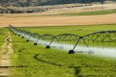 picture of alfalfa  - a center pivot irrigation system working in an alfalfa field - JPG