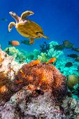 stock photo of saltwater fish  - Topical saltwater fish  - JPG