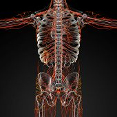 picture of plexus  - 3d render illustration of the male nerves  - JPG