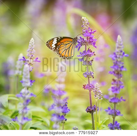 Monarch Butterfly On Flower In Garden On Morning