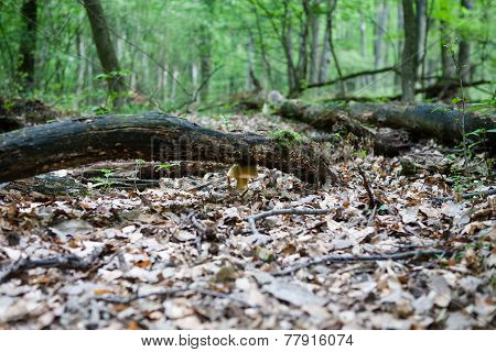 Forest Floor With Mushroom