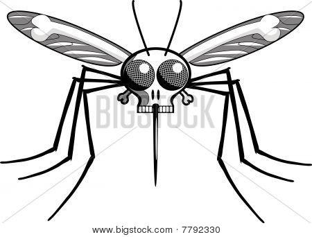 Deaths Head Mosquito : Bigstock